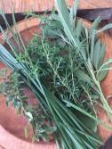 Herbs - oregano, chives, savory, sage